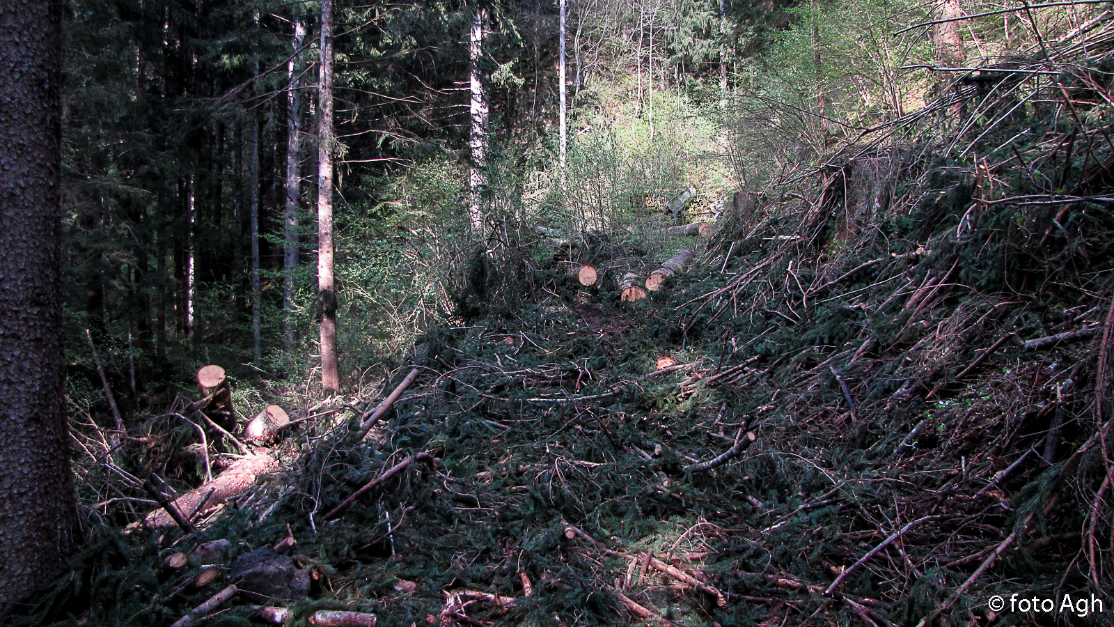 """Classico esbosco """"alla trentina"""": si porta via il legno pregiato e quello di scarto viene lasciato sul posto che diventa così impraticabile"""