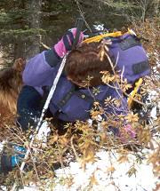 Ravanage in boscaglia (Agh)